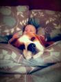 Собака забрала у малыша игрушку, а потом просила прощения (Видео)
