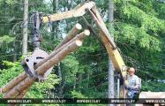 В Беларуси заготавливают древесину в чернобыльской зоне