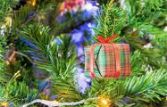 Как выбрать долговечную и красивую рождественскую елку