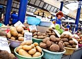 В Москве белорусские яблоки продаются как польские, а картошка как голландская