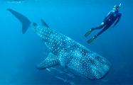 Ученые раскрыли секрет долголетия крупнейших рыб современности