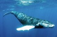 На Филиппинах в желудке кита обнаружили 40 кг пластиковых пакетов