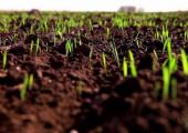 Минсельхозпрод рассчитывает получить 8,5 миллионов тонн зерна