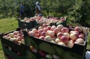 Польский яблочный спас