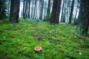 КГК установит жесткий контроль над лесом
