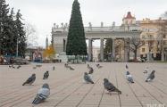 В Минске уже появляются новогодние елки