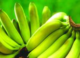 Витебские таможенники «развернули» 20 тонн бананов