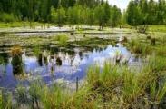 В Беларуси пройдет болотный конгресс