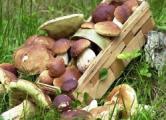 Ценники на грибы на разных концах «Комаровки» отличаются в два раза