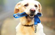 В Бресте собака охраняла своего хозяина, который уснул на дороге