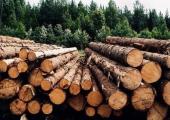 Лукашенко требует пресечь серые схемы вывоза древесины за рубеж