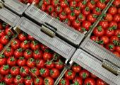 От Анталии до Херсона. Беларусь скупает помидоры у соседей и друзей