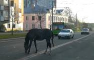 Фотофакт: По центру Могилева снова гуляют лошади