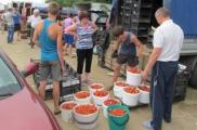 Продавцы клубники на Брестчине: Из-за Крыма мы теряем деньги