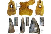 В Саудовской Аравии нашли останки динозавров рекордной сохранности