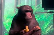 Илон Маск показал играющую силой мысли чипированную обезьяну