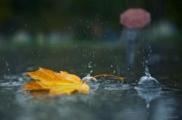 В Беларуси осень начнется с сырой погоды