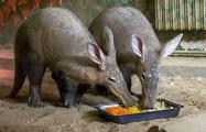 Минский зоопарк рассказал о причинах подорожания билетов