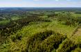 В Бразилии расследуют продажу тропических лесов через Facebook