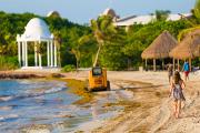 Мексика потратит девять миллионов долларов на очистку пляжей от водорослей