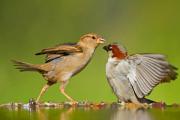 Орнитологи объяснили повышенную агрессивность городских птиц