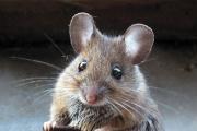 Живодерку из бундесвера оштрафовали за убийство 33 мышей