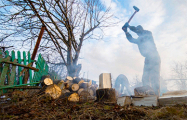 В Беларуси подорожали дрова для тех, кто заготавливает их сам
