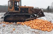 В России уничтожали 2,5 тонны помело, ввезенных из Беларуси