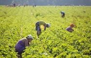 В ожидании рабочих рук: как пандемия изменила рынок труда в Польше