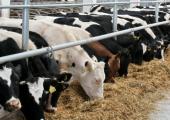 Минсельхоз будет расширять список предприятий Беларуси, поставляющих молоко в Россию