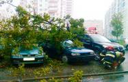 В Минске сильный ветер валит деревья