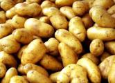 С начала года картошка подорожала в 1,5 раза