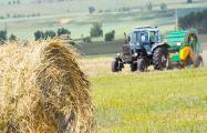 Долги сельского хозяйства в Беларуси побили исторический рекорд