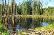 В Березинском заповеднике представители 14 стран обсудили болота