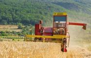 Колхозники рискнули всем своим имуществом
