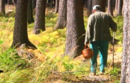Фотофакт: В Беларуси началась «грибная лихорадка»