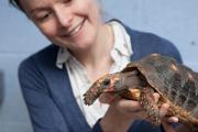 Черепах научили пользоваться тачскринами