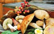 В Беларуси вводят налог на грибы и ягоды?
