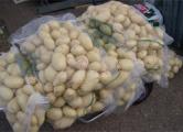 «Россельхознадзор» забраковал украинскую картошку