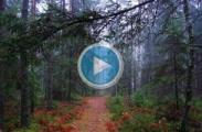 Заблудившаяся старушка плутала по белорусском лесу четверо суток