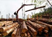 Бензин и доски обеспечивают свыше 60 процентов экспорта Беларуси в Латвию