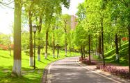 Могилевчане собирают подписи за присвоение зеленым зонам города исторических названий