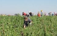 Рабства в Беларуси нет, но все на сельхозработы