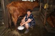 Президент разрешил крестьянам продавать молоко по собственному усмотрению