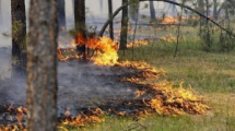 В Беларуси введен запрет на посещение лесов