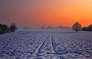 Почему в Беларуси не распахивают и не засевают поля?