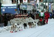 На Аляске маршрут гонки на собачьих упряжках изменили из-за нехватки снега