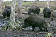 ЕС выделит Беларуси 1,7 млн евро для борьбы с болезнями диких животных