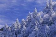 """Гидрометеоцентр пообещал «сказку"""" на Новый год"""