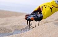 Bloomberg: Беларусь будет покупать иранскую нефть через Россию